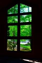 Greenery through window
