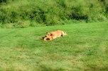 Frisbee Pup