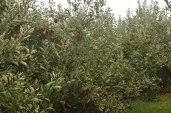 Lynd's Fruit Farm