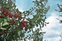 Lynd10Lynd's Fruit Farm